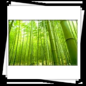 Canne di bambu giganti bo r a di vincenzo bonura for Prezzi bambu giganti
